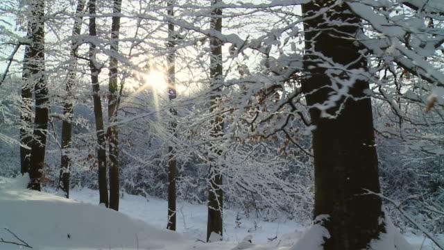 HD-ZEITLUPE: Bewegung durch Winter Forest