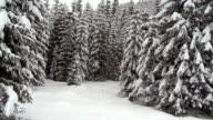 Sich durch den Winter Forest