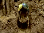 Mud passed in bowls along human chain in gold mine eastern Dominican Republic of Congo