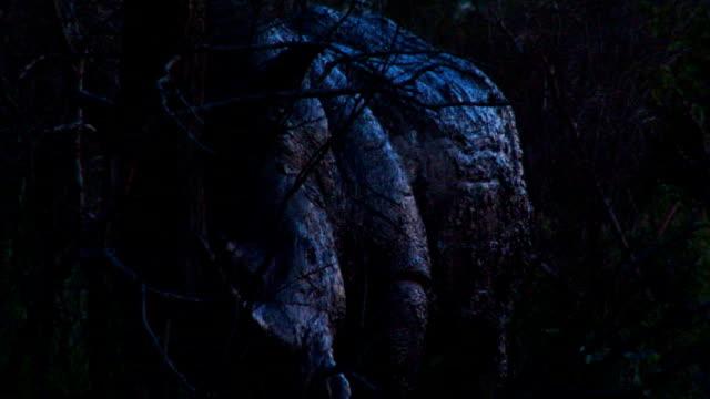 Muddy rhino walking through grass/ South Africa