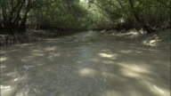 A muddy river flows along a dense forest. Available in HD.