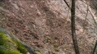 Mudslide on Side of the Road