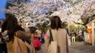 A multi clip showing Japanese female tourists taking pictures of an illuminated blossoming cherry tree in Kyoto at sunset
