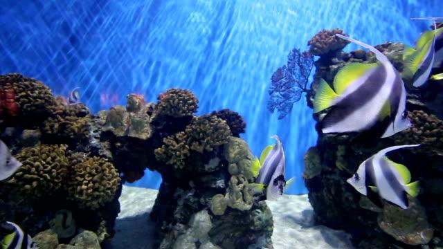 Multi coloured fish