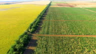 Multi-colored fields with vineyards and sunflowers, aerial video