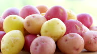 multicolored potatoes of different varieties
