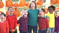 Multi-ethnic children in a row, pumpkins behind them
