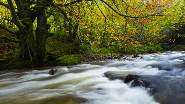 Muniellos Nature Reserve, Fuentes del Narcea, Degana e Ibias Natural Park, Asturias, Spain, Europe