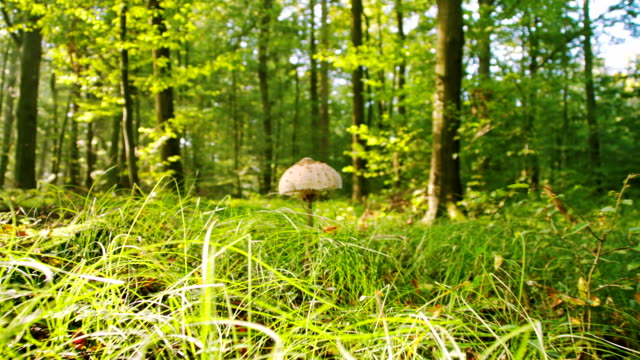 MS Mushroom In The Forest