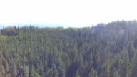 Muskeg Forest
