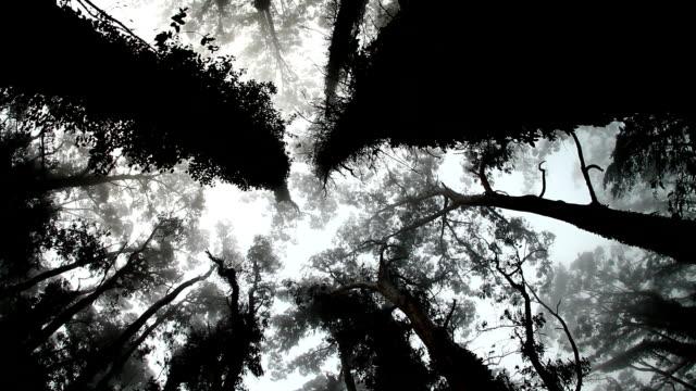 Mystic Bäumen