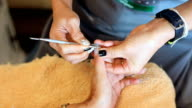 Nail manicure in beauty salon