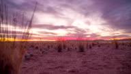 LA DS Namibian Savannah At Sunset