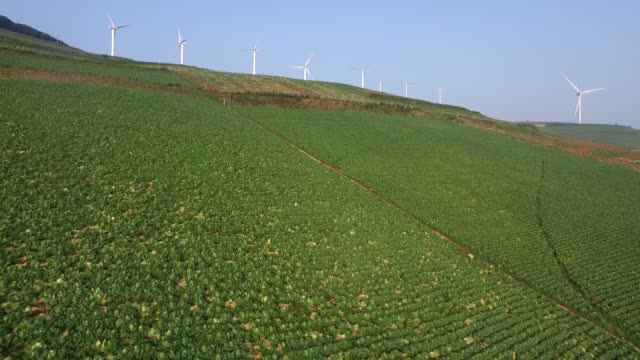 Napa cabbages grow in a field as wind turbines stand in the background in this aerial video taken above Taebaek South Korea on Monday Aug 31 2015
