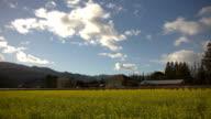 Napa Valley HDR Mustard Season Timelapse