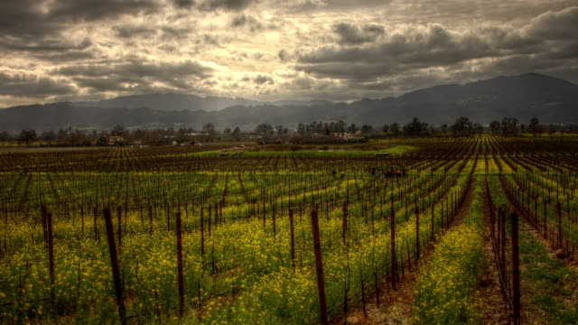 Napa Valley Mustard Epic HDR Timelapse