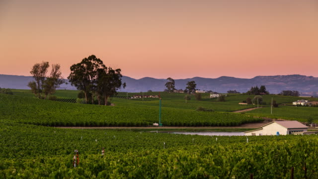 Napa Vineyard at Sunset - Time Lapse