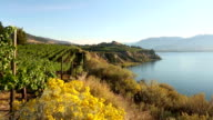 Naramata Bench Penticton Okanagan Valley Vineyard