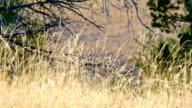 Native grass Western Ranch Oregon 23
