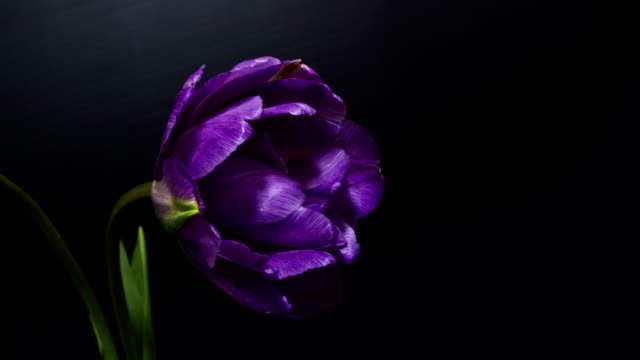 natrure purple flower