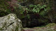 Natural cave inside beech forest
