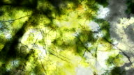 BEECH TREES IN AUTUMN : natural colors (seamless loopable)