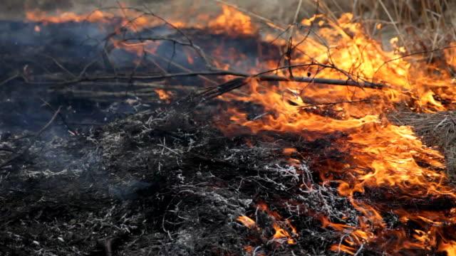 Disastro naturale, fuoco sul campo