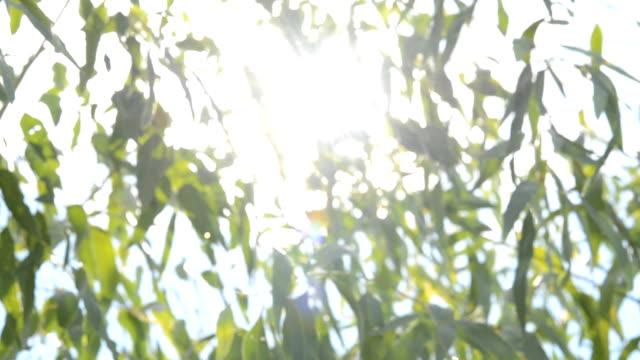 Natural green leaf blurred background. Defocused green blurred background.