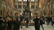 Natural History Museum dinosaur 'Dippy' to tour country Dippy the dinosaur replica skeleton on display/