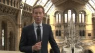 Natural History Museum dinosaur replaced by blue whale ENGLAND London Natural History Museum INT Reporter to camera