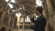 Natural History Museum dinosaur replaced by blue whale Natural History Museum Reporter to camera/ CUTAWAYS blue whale skeleton 'Hope' hanging in...