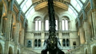Dippy the Diplodocus to be replaced by blue whale skeleton Dippy the Diplodocus on display in central hall ZOOM IN
