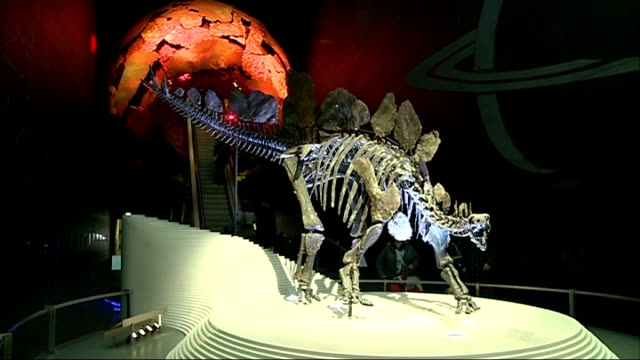 Natural History Museum scientists study Stegosaurus dinosaur 'Sophie' Stegosaurus dinosaur skeleton 'Sophie' on display in Natural History Museum