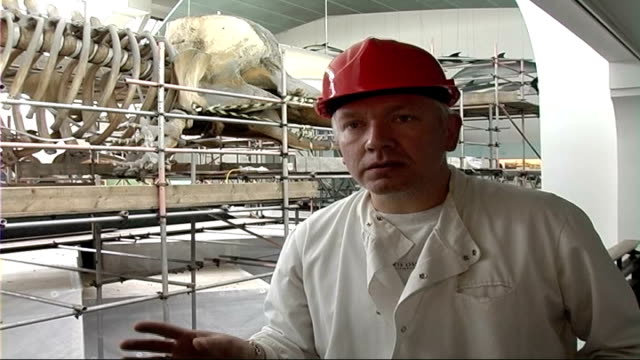 Natural History Museum whale skeleton cleaned Richard Sabin interview SOT it's critical