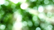 Natural video background.nature green bokeh sunlight backgrounds.