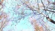 HD: Natur im Herbst