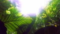 Nature in Botanical Garden