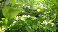 Nature in Naples Botanical Garden