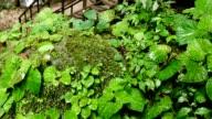 Nature moss fern mushroom in Waterfall of paradise slide shot.