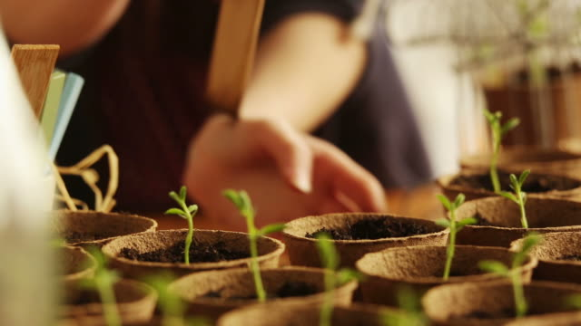 Nature, planting seedling           NA