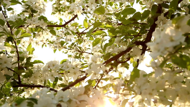 nature tree light bee