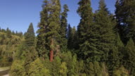 RISE near river Redwood Forest, Aerial, 4K, 18s, 40of50, Forest Trees, Northern California Tallest trees in the world, Sun flare, Hyperion Tree, world record, Stock Video Sale - Drone Discoveries 4K Nature/Wildlife/Weather Drone aerial video