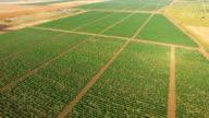 Neat rows of vineyards, aerial video