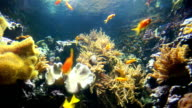 Nemo & tropical fish on coral reef in aquarium