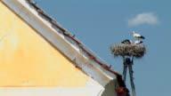 HD: Nest of storks