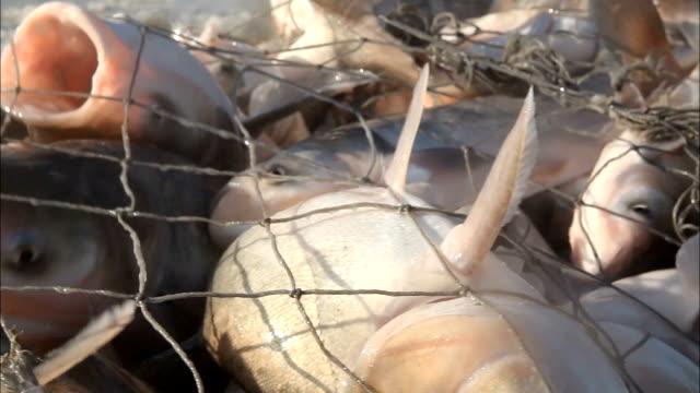 net fish