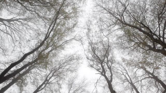 Netherlands, 's-Graveland, Rural estate called Hilverbeek. Treetops. Autumn colours