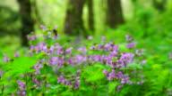Nettle flowers