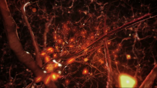 Neuron cells. Network connections. Orange. Synapse. Brain.
