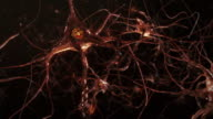 Neuron cells, synapse. Warm colors. Network connections. Brain.
